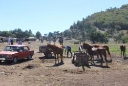 Лошадей и верблюдой на Ай-Петри больше не будут использовать