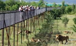 Сафари-парк Тайган